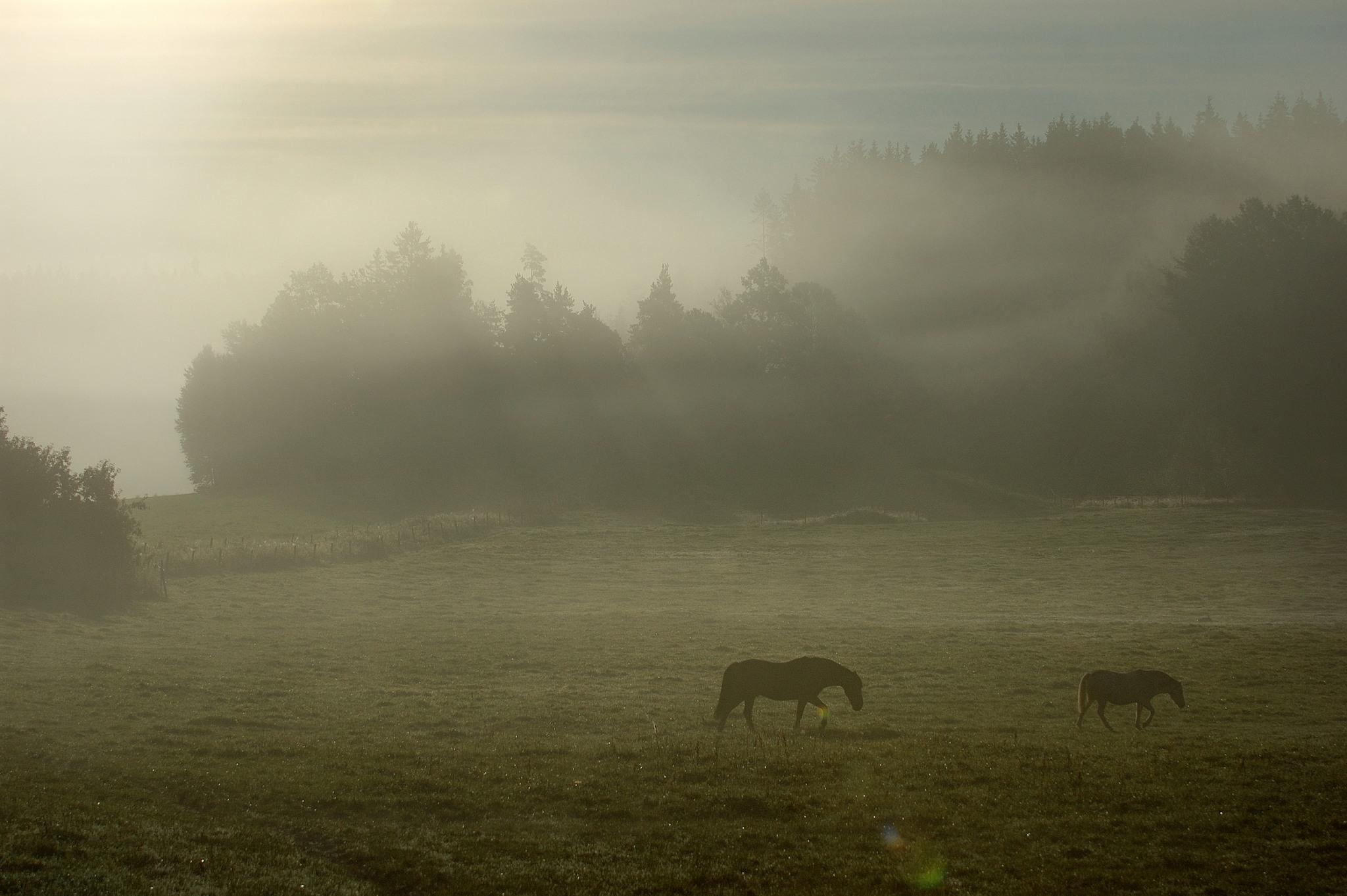 Bild på på en äng med hästar